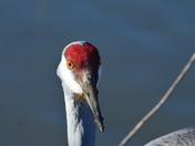 Alaksen Bird Sanctuary