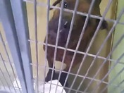 Gidget 1YO sweetheart, no one is looking at her... why??
