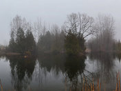 Foggy Meadow Pond