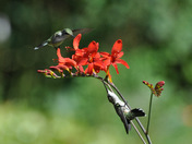 Two Hummers