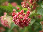 Calendar Flowers