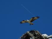 Osprey & Jetspray