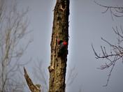 Woodpecker's Home