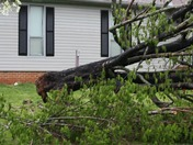 John Gold_Storm Damage_Tree Down