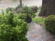 Downpour in Auburn, Calfornia