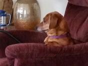 GIDGET WATCHING TV