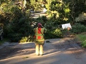 Trees down hillside ave pacific grove
