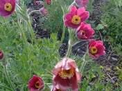 Wildflowers Delight!