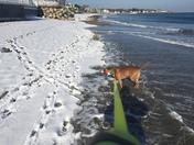 Buddy loving the beach in Rye, NH