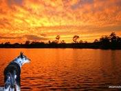 Dog at sunset.