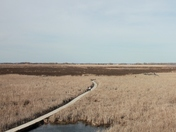 Effects of the fire at Point Pelee National Park
