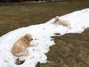 Snow Going