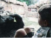 Grandson telling gorilla a story. Gorilla is bored