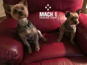 Meet the dogs of Mach 1 Financial Group