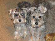 """Our 2 """"rescue"""" kids"""