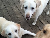 Daisy Celebrating National Pet Day