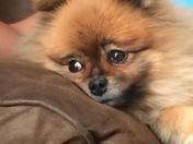 A dog's life, it's ruff!!