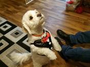 Baxter dressed up