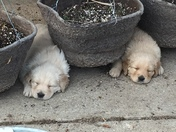 First day ever outside tuckered us out!