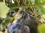 Baby birds hatching in Rio Rancho