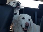 Sassy Lassy Pet Sitting Service