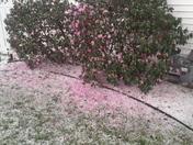 Hail, wind and rain n West Point, NE