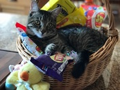 Gimli, the Easter Kitty!