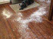 Riley and the powdered sugar