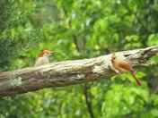 Birds friends