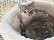 JOY MISSING CAT