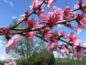 Sights & smells of spring
