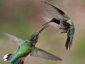 abttle of the hummers