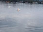 Sunsets & pelicans