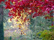 Fall,s colours