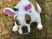 A Bully Easter