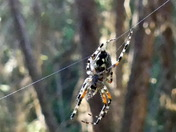 Spider Zipline