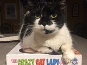 Crazy Cat Lady Exposed