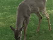 9 hungry deer