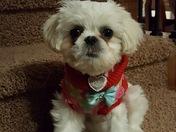 Daisy Ready to go for  a Walk