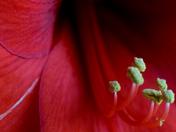 Petal and Pollen