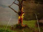 Lightning Struck A Tree.