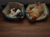 The 2 boys are asleep