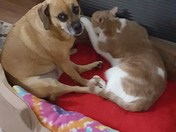 Share the heat on a rainy day, Rosie & Buddy in Freeport
