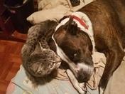 Bella and Sassy