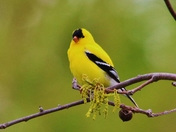 a little birding today