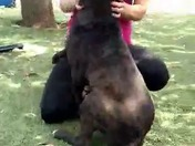 Rocky, adorable 8MO puppy, HW neg, ladies man, lap dog, cuddlebug