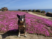 Riley takes a ride on the magic carpet in Pacific Grove.