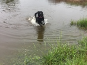 DaisyBelle loves the Pond