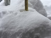 Spring snow storm north of Santa Fe, NM