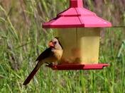 birds, 5-1-2017